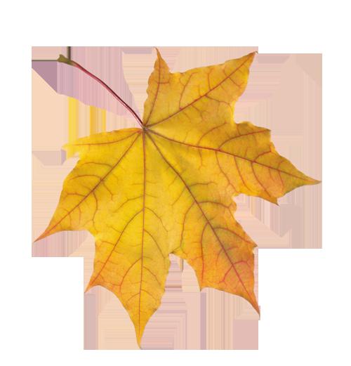 сегодня Порядок осенние листья для фотошопа статистика операций карте