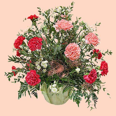 Цветы к 8 марта какой букет подарить
